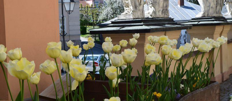 Kwitnący ogród Kolegiaty